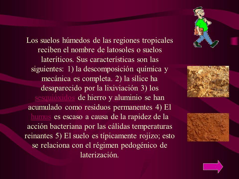 Los suelos húmedos de las regiones tropicales reciben el nombre de latosoles o suelos lateríticos. Sus características son las siguientes: 1) la desco