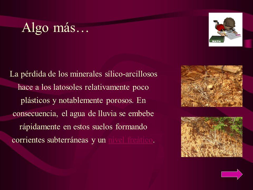La pérdida de los minerales sílico-arcillosos hace a los latosoles relativamente poco plásticos y notablemente porosos. En consecuencia, el agua de ll