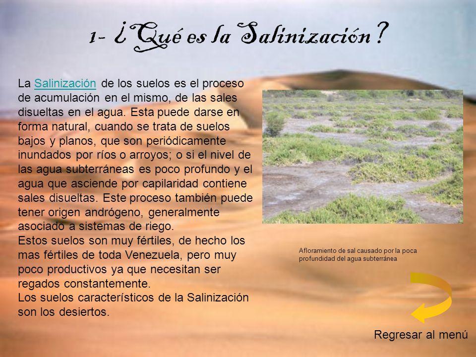 La Salinización de los suelos es el proceso de acumulación en el mismo, de las sales disueltas en el agua. Esta puede darse en forma natural, cuando s