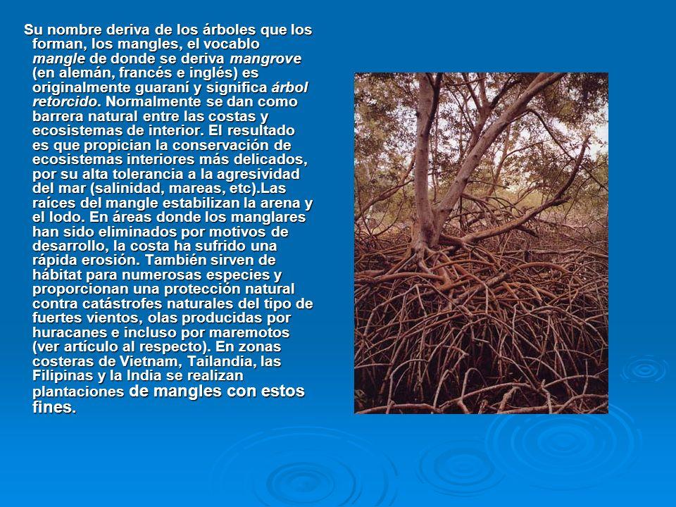 Su nombre deriva de los árboles que los forman, los mangles, el vocablo mangle de donde se deriva mangrove (en alemán, francés e inglés) es originalme