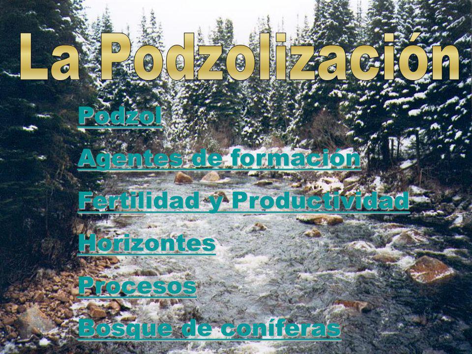 Podzol Agentes de formación Agentes de formación Fertilidad y Productividad Fertilidad y Productividad Horizontes Procesos Bosque de coníferas Bosque