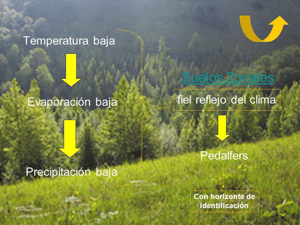 Temperatura baja Evaporación baja Precipitación baja Suelos Zonales fiel reflejo del clima Pedalfers Con horizonte de identificación