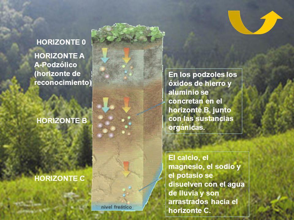 En los podzoles los óxidos de hierro y aluminio se concretan en el horizonte B, junto con las sustancias orgánicas. El calcio, el magnesio, el sodio y