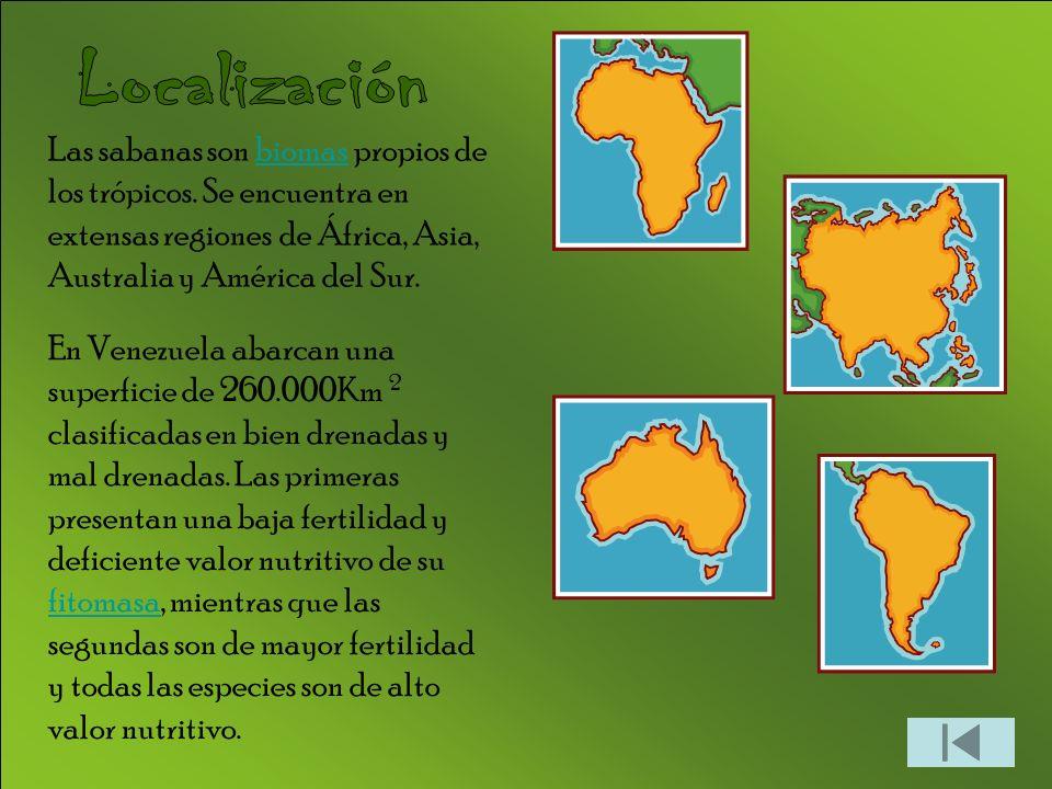 Las sabanas son biomas propios de los trópicos. Se encuentra en extensas regiones de África, Asia, Australia y América del Sur.biomas En Venezuela aba