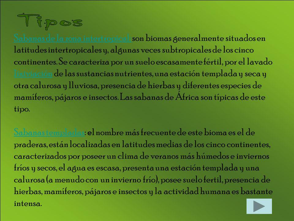 Sabanas de la zona intertropical: Sabanas de la zona intertropical: son biomas generalmente situados en latitudes intertropicales y, algunas veces subtropicales de los cinco continentes.