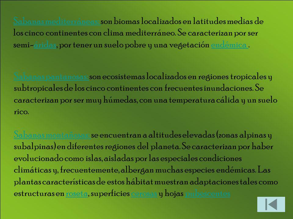 Sabanas pantanosas: Sabanas pantanosas: son ecosistemas localizados en regiones tropicales y subtropicales de los cinco continentes con frecuentes inundaciones.