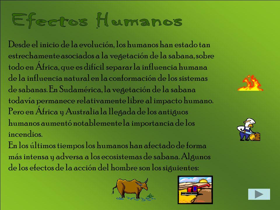 Desde el inicio de la evolución, los humanos han estado tan estrechamente asociados a la vegetación de la sabana, sobre todo en África, que es difícil separar la influencia humana de la influencia natural en la conformación de los sistemas de sabanas.