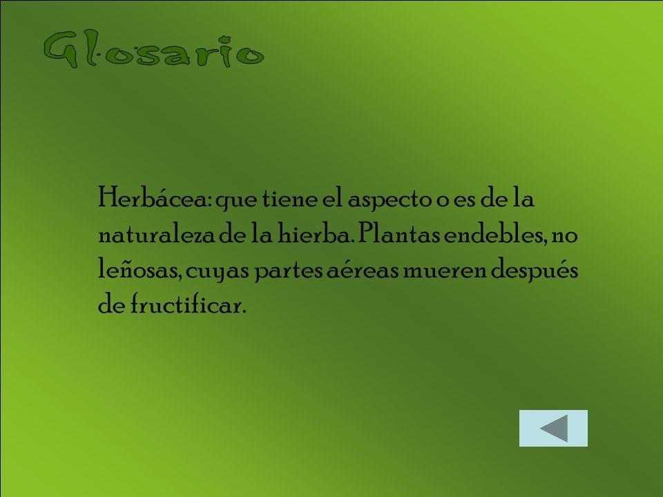 Herbácea: que tiene el aspecto o es de la naturaleza de la hierba. Plantas endebles, no leñosas, cuyas partes aéreas mueren después de fructificar.