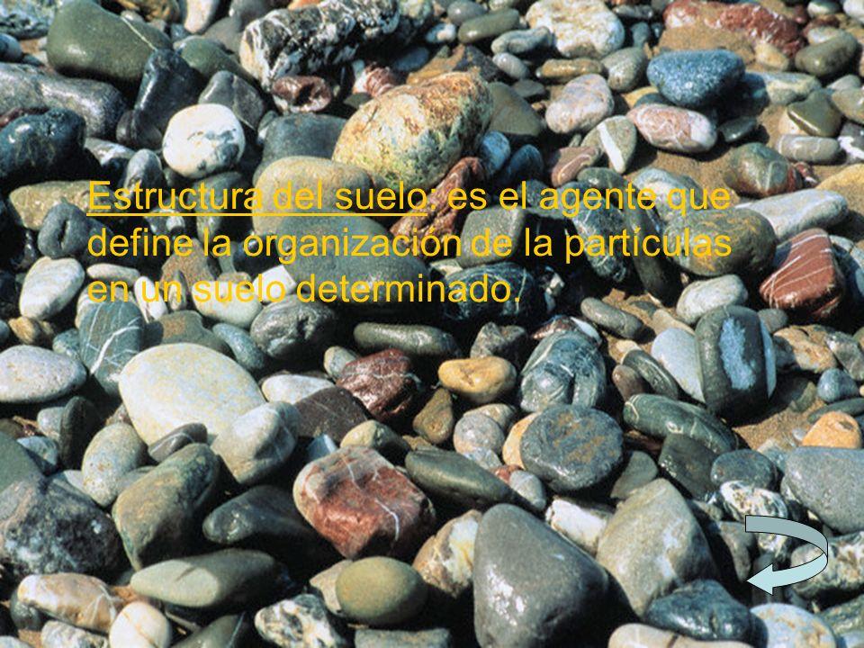 Estructura del suelo: es el agente que define la organización de la partículas en un suelo determinado.