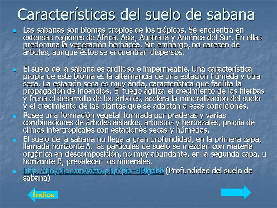 Características del suelo de sabana Las sabanas son biomas propios de los trópicos.