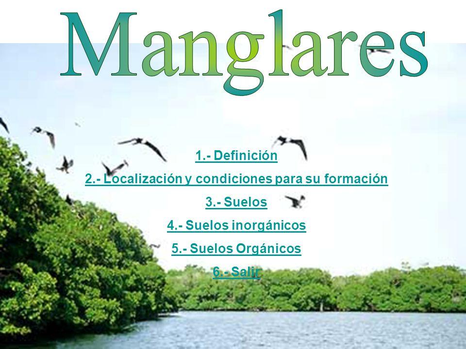 El manglar es un tipo de ecosistema considerado a menudo un tipo de bioma, formado por árboles muy tolerantes a la sal que ocupan la zona intermareal de las costas de latitudes tropicales de la Tierra.