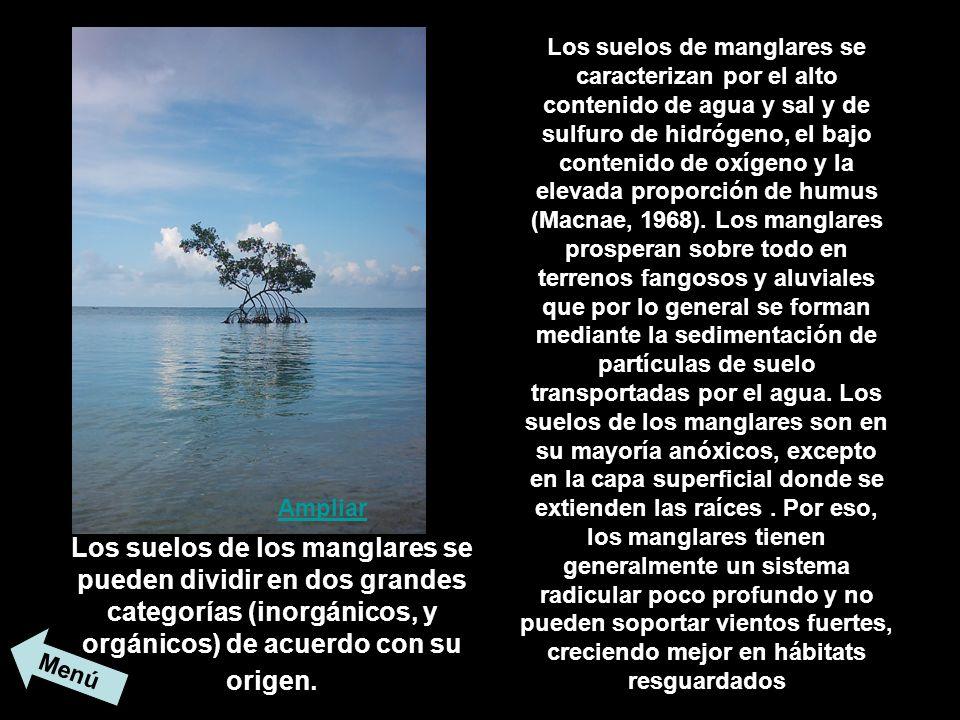 Los suelos de manglares se caracterizan por el alto contenido de agua y sal y de sulfuro de hidrógeno, el bajo contenido de oxígeno y la elevada propo