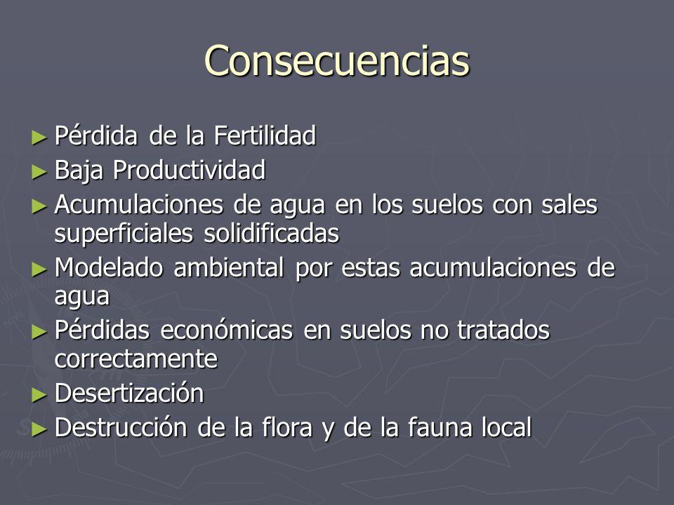 Consecuencias Pérdida de la Fertilidad Pérdida de la Fertilidad Baja Productividad Baja Productividad Acumulaciones de agua en los suelos con sales su