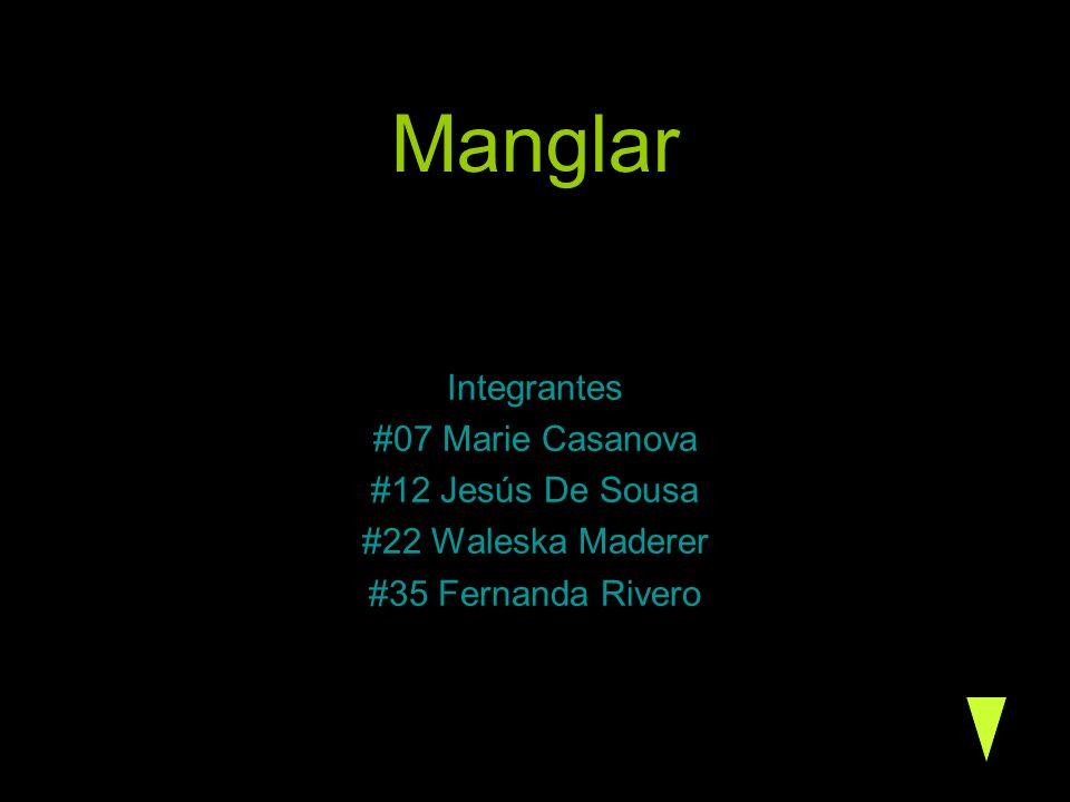 Manglar Integrantes #07 Marie Casanova #12 Jesús De Sousa #22 Waleska Maderer #35 Fernanda Rivero