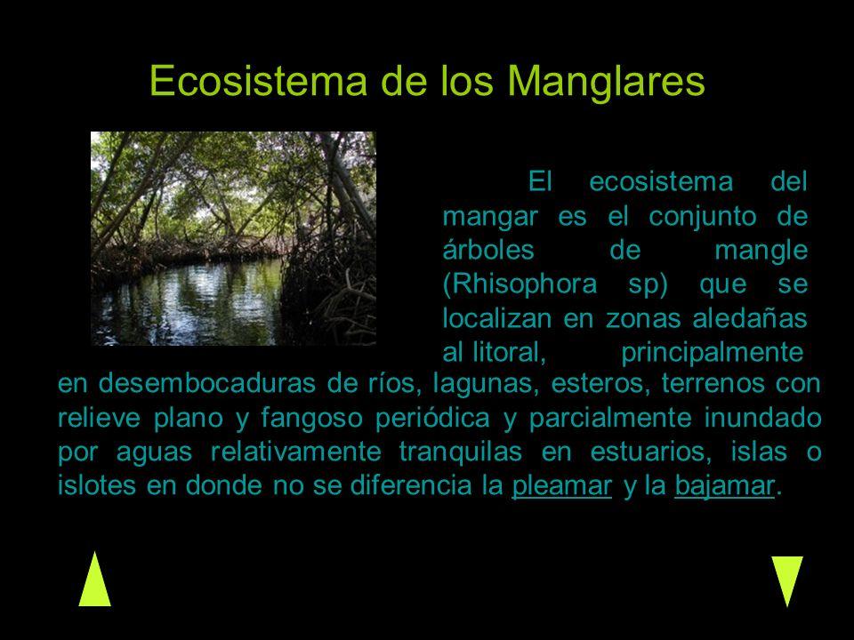 Ecosistema de los Manglares en desembocaduras de ríos, lagunas, esteros, terrenos con relieve plano y fangoso periódica y parcialmente inundado por ag
