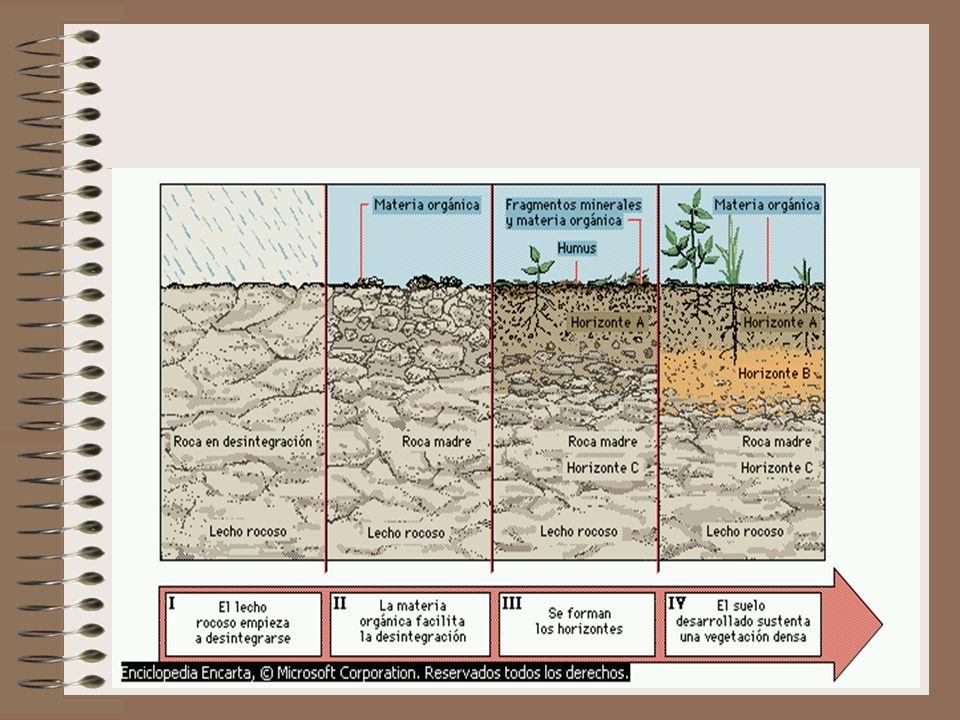 AGUA DEL SUELO Representa una solución de varias trazas de minerales. Suministra la humedad necesaria para las reacciones químicas. Provee nutientes e