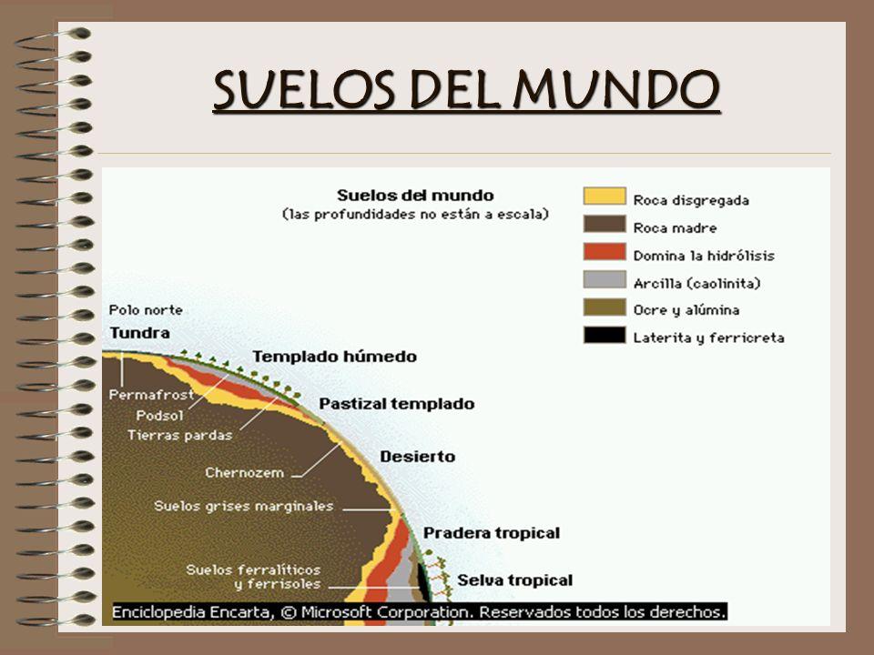 SUELO: Def Cubierta superficial de la mayoría de la superficie continental de la Tierra. Es un agregado de minerales no consolidados y de partículas o