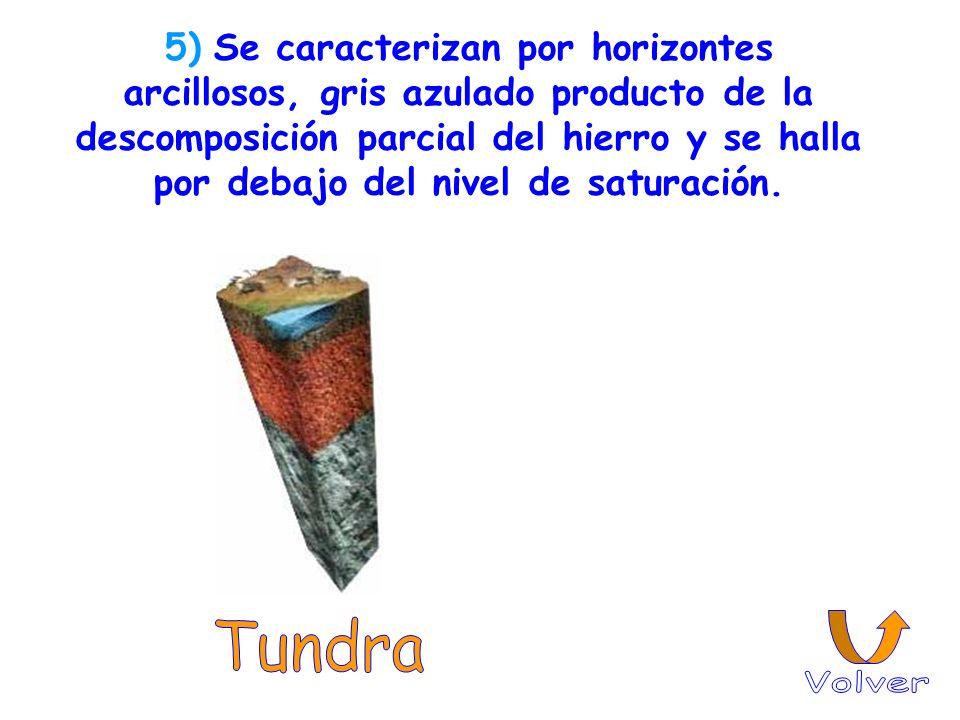 5) Se caracterizan por horizontes arcillosos, gris azulado producto de la descomposición parcial del hierro y se halla por debajo del nivel de saturac