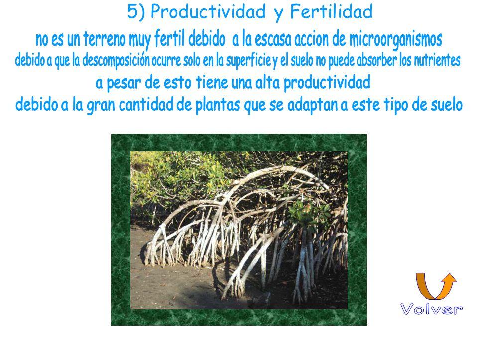 5) Productividad y Fertilidad