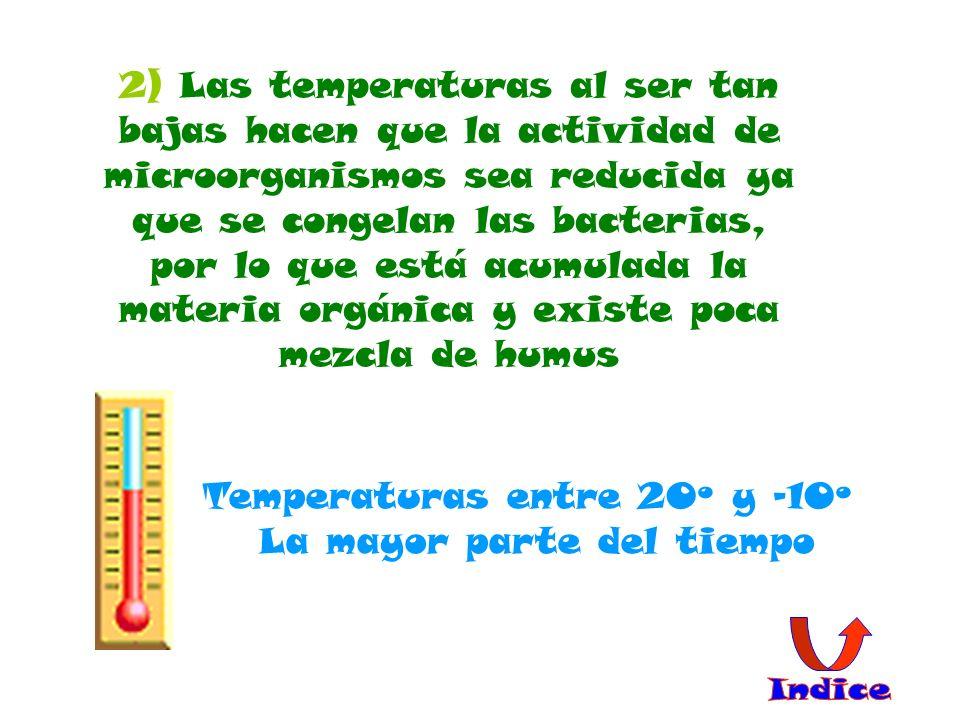 2) Las temperaturas al ser tan bajas hacen que la actividad de microorganismos sea reducida ya que se congelan las bacterias, por lo que está acumulad