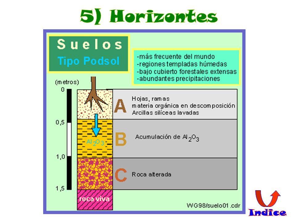 5) Suelo muy ácido, poco productivo y poco fértil, de ahí a que sólo se den bosques de coníferas.