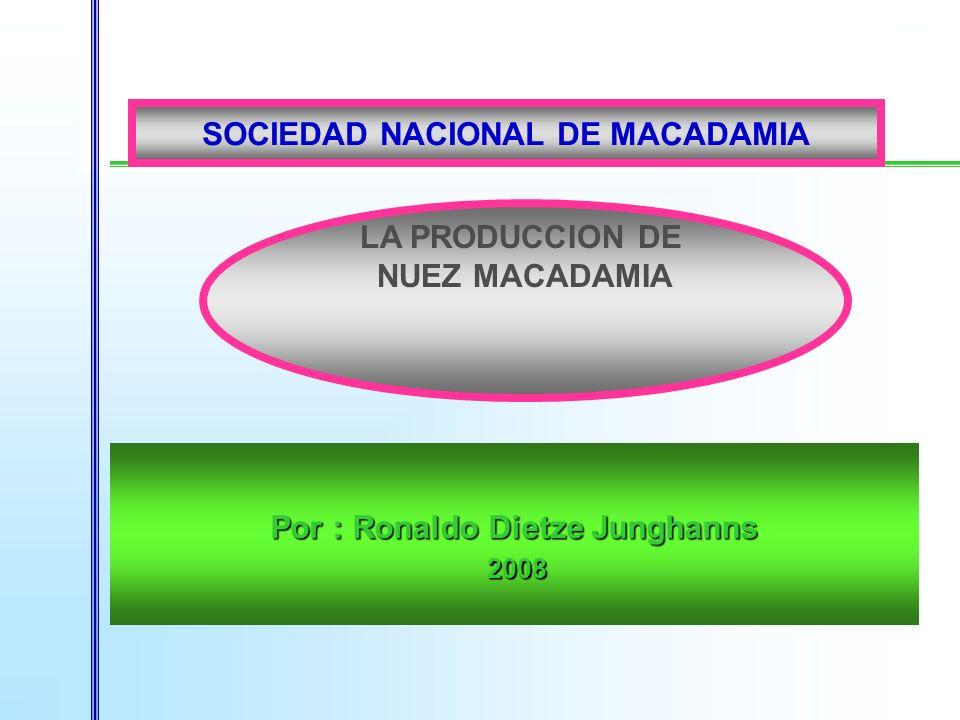 Por : Ronaldo Dietze Junghanns 2008 2008 LA PRODUCCION DE NUEZ MACADAMIA SOCIEDAD NACIONAL DE MACADAMIA