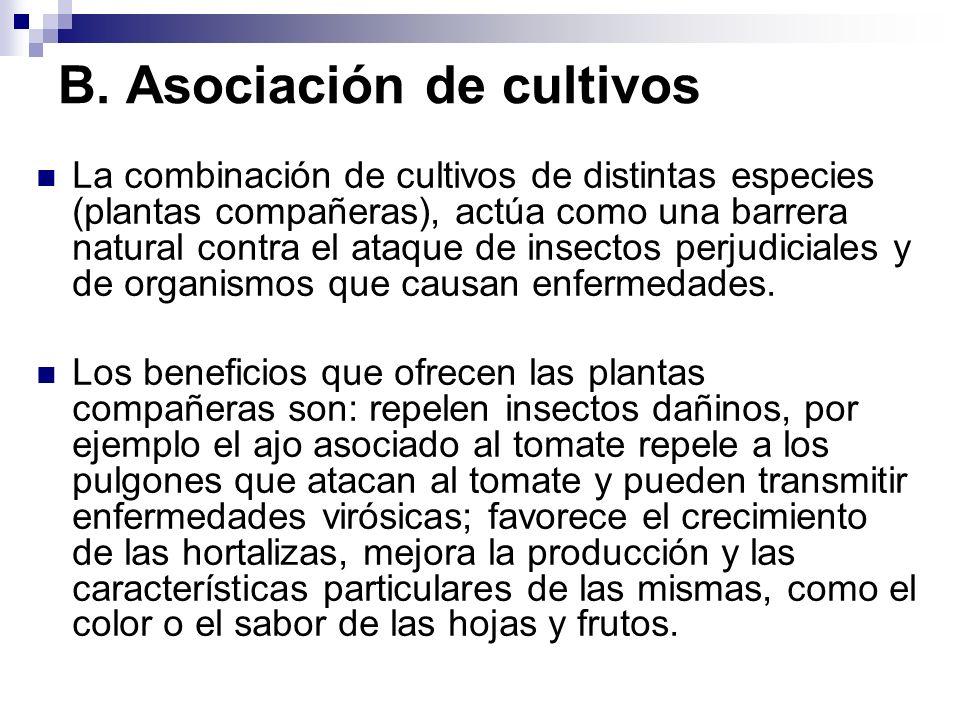 B. Asociación de cultivos La combinación de cultivos de distintas especies (plantas compañeras), actúa como una barrera natural contra el ataque de in