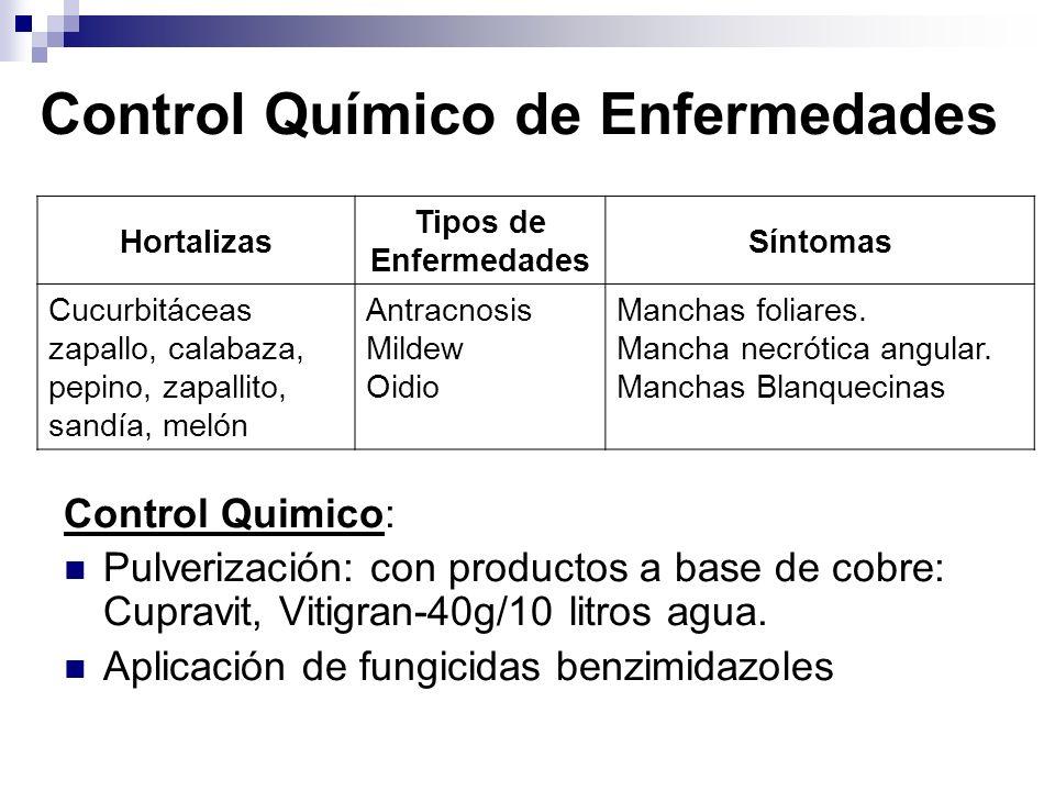 Control Químico de Enfermedades Control Quimico: Pulverización: con productos a base de cobre: Cupravit, Vitigran-40g/10 litros agua. Aplicación de fu
