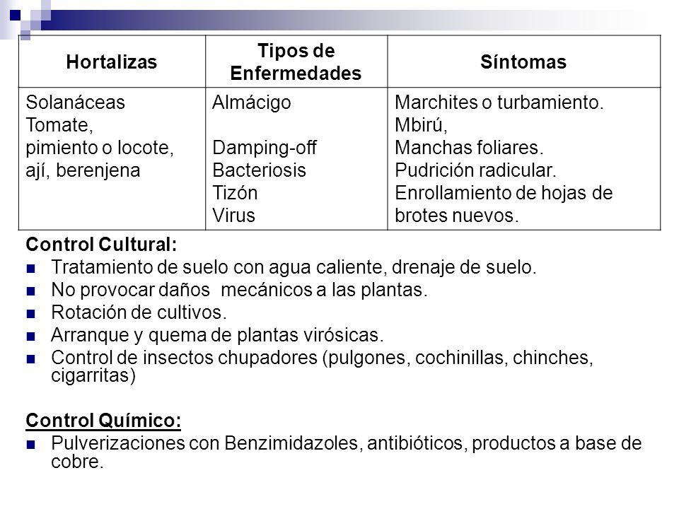 Control Cultural: Tratamiento de suelo con agua caliente, drenaje de suelo. No provocar daños mecánicos a las plantas. Rotación de cultivos. Arranque