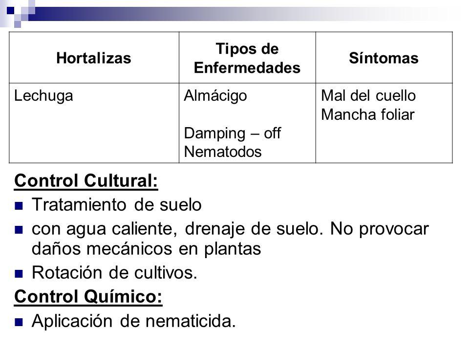 Control Cultural: Tratamiento de suelo con agua caliente, drenaje de suelo. No provocar daños mecánicos en plantas Rotación de cultivos. Control Quími