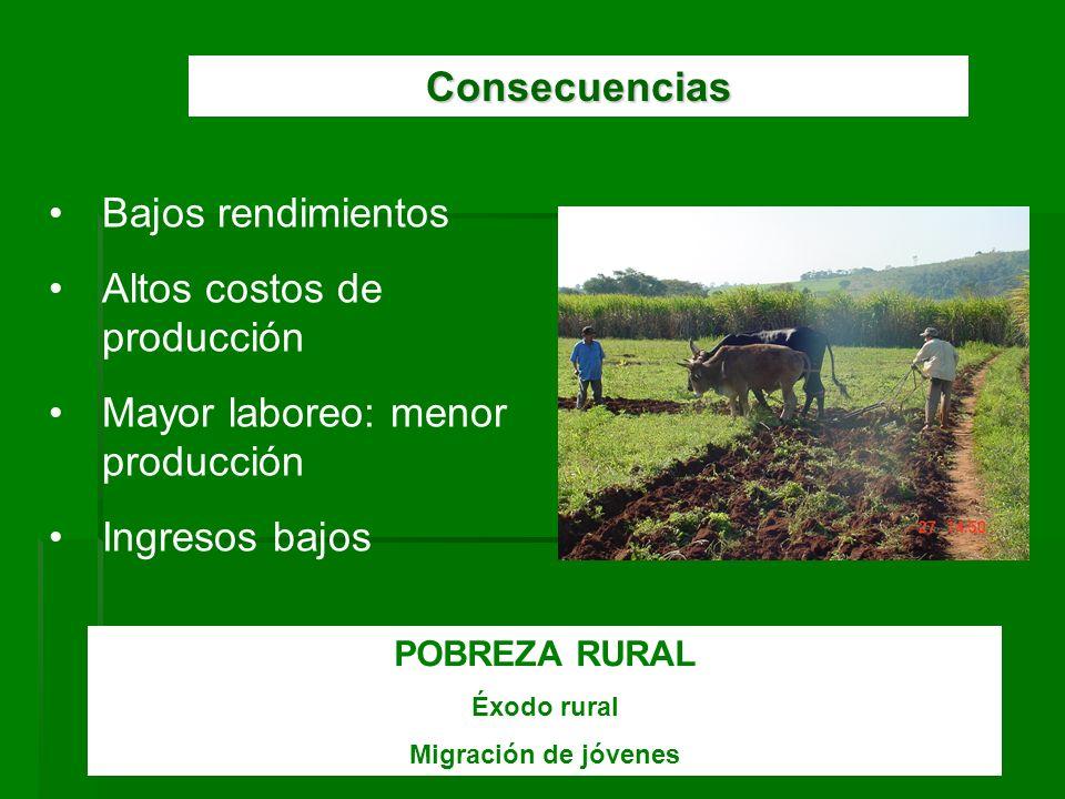 Consecuencias Bajos rendimientos Altos costos de producción Mayor laboreo: menor producción Ingresos bajos POBREZA RURAL Éxodo rural Migración de jóve
