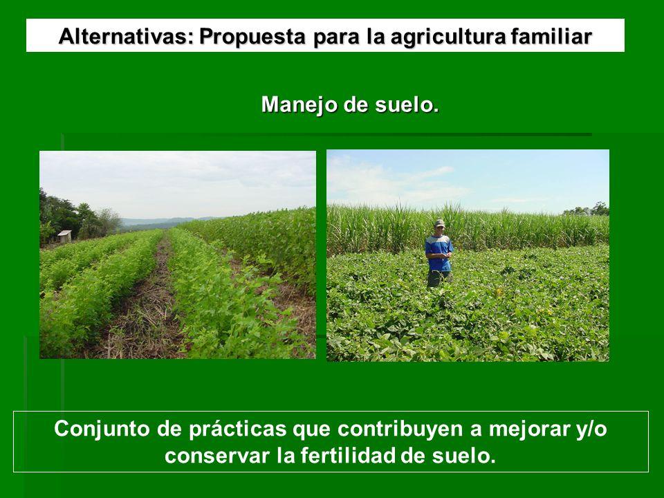 Alternativas: Propuesta para la agricultura familiar Manejo de suelo. Conjunto de prácticas que contribuyen a mejorar y/o conservar la fertilidad de s