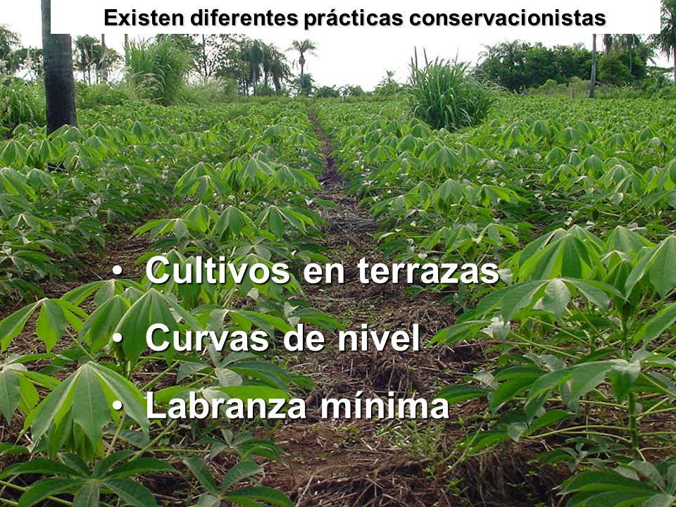 Existen diferentes prácticas conservacionistas Cultivos en terrazasCultivos en terrazas Curvas de nivelCurvas de nivel Labranza mínimaLabranza mínima