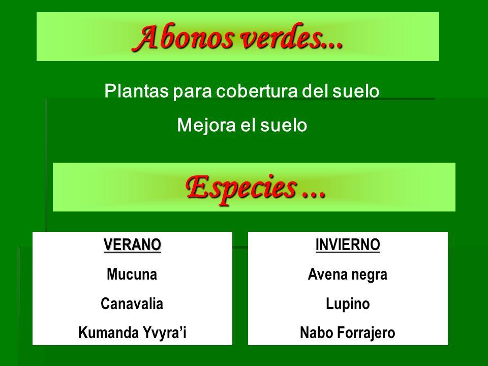 Abonos verdes... Plantas para cobertura del suelo Mejora el suelo Especies... VERANO Mucuna Canavalia Kumanda Yvyrai INVIERNO Avena negra Lupino Nabo