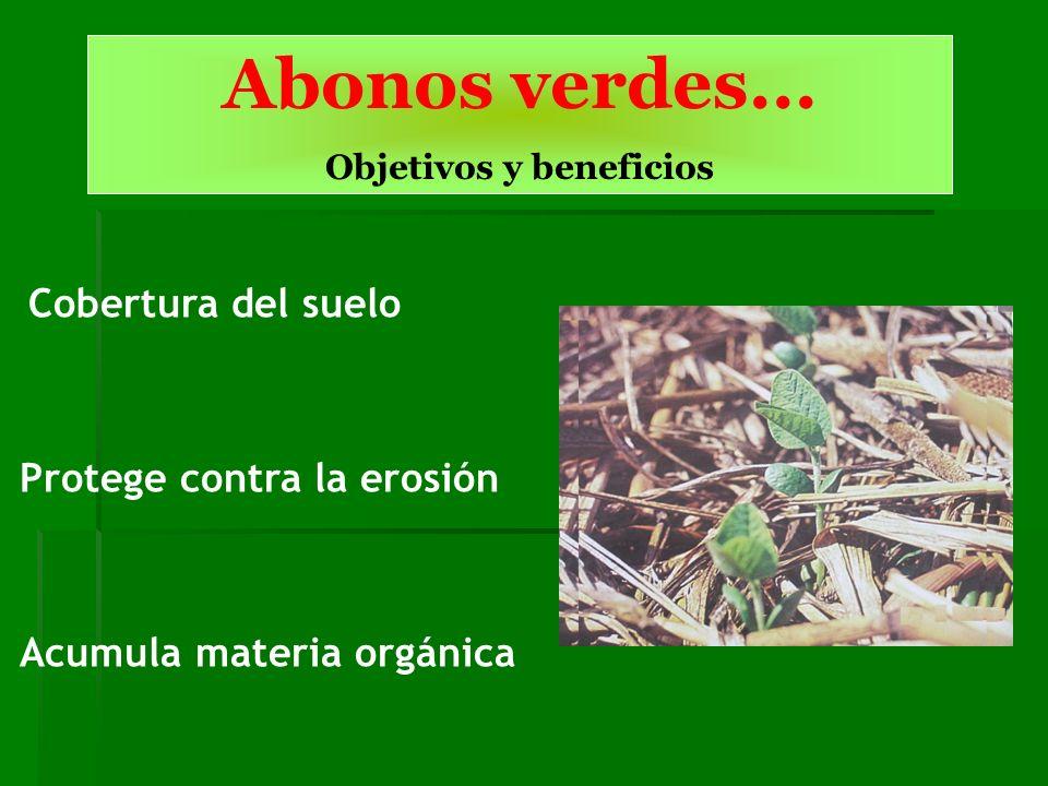 Abonos verdes... Objetivos y beneficios Cobertura del suelo Protege contra la erosión Acumula materia orgánica
