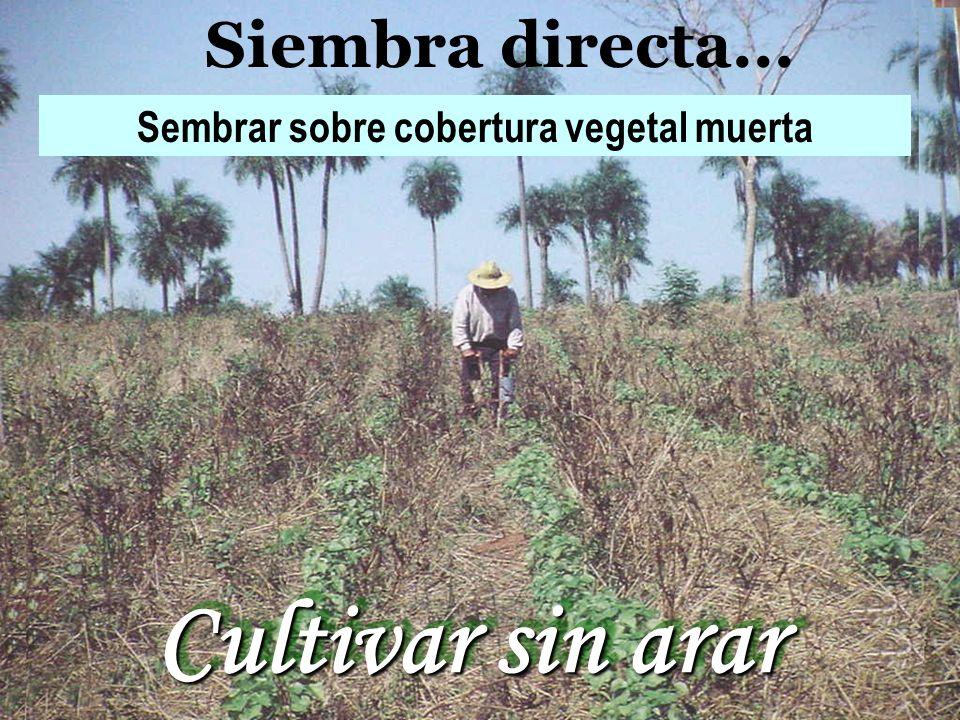 Siembra directa... Sembrar sobre cobertura vegetal muerta Cultivar sin arar Cultivar sin arar