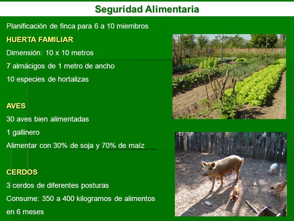 Seguridad Alimentaria Planificación de finca para 6 a 10 miembros HUERTA FAMILIAR Dimensión: 10 x 10 metros 7 almácigos de 1 metro de ancho 10 especie