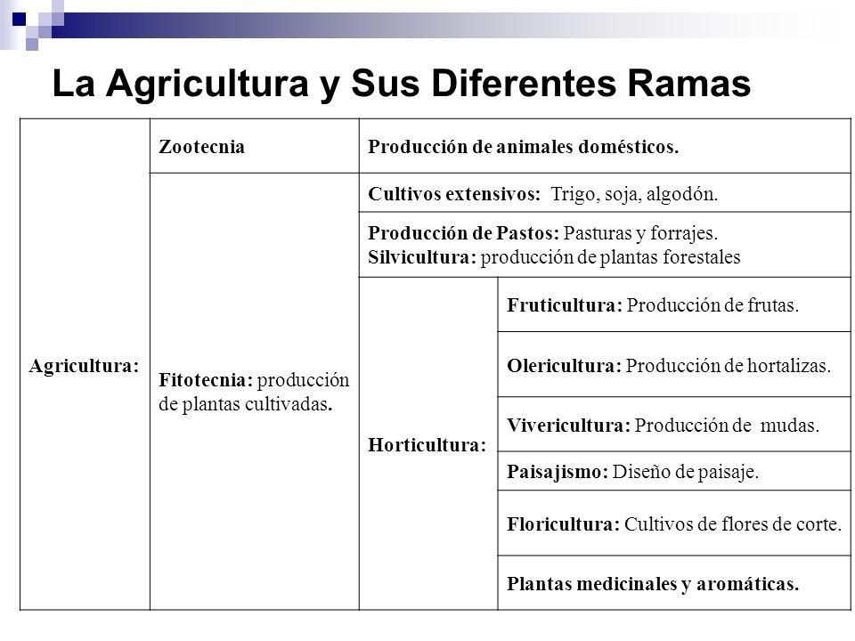 La Agricultura y Sus Diferentes Ramas Agricultura: ZootecniaProducción de animales domésticos.