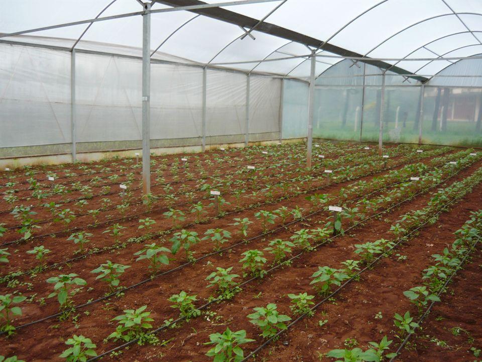Importancia De La Horticultura Para La Vida Diaria La forma en que una sociedad obtiene sus alimentos es de suma importancia, porque influye en el tamaño de la comunidad, la permanencia de sus miembros en los asentamientos, el tipo de economía, las creencias, las artes y el grado de desigualdad social y política.