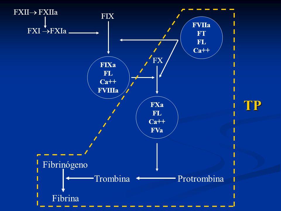 FVIIa FT FL Ca++ FX FXa FL Ca++ FVa Trombina Protrombina Fibrinógeno Fibrina FXII FXIIa FXI FXIa FIX FIXa FL Ca++ FVIIIa TP