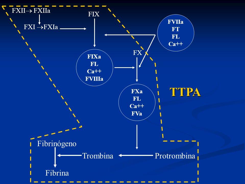 FVIIa FT FL Ca++ FX FXa FL Ca++ FVa Trombina Protrombina Fibrinógeno Fibrina FXII FXIIa FXI FXIa FIX FIXa FL Ca++ FVIIIa TTPA