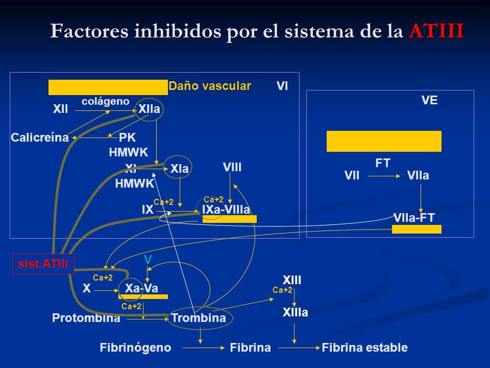 Factores inhibidos por el sistema de la ATIII XII colágeno XIIa Daño vascular Calicreína PK HMWK VI XI XIa HMWK IX Ca+2 IXa-VIIIa sist.ATIII VIII Ca+2
