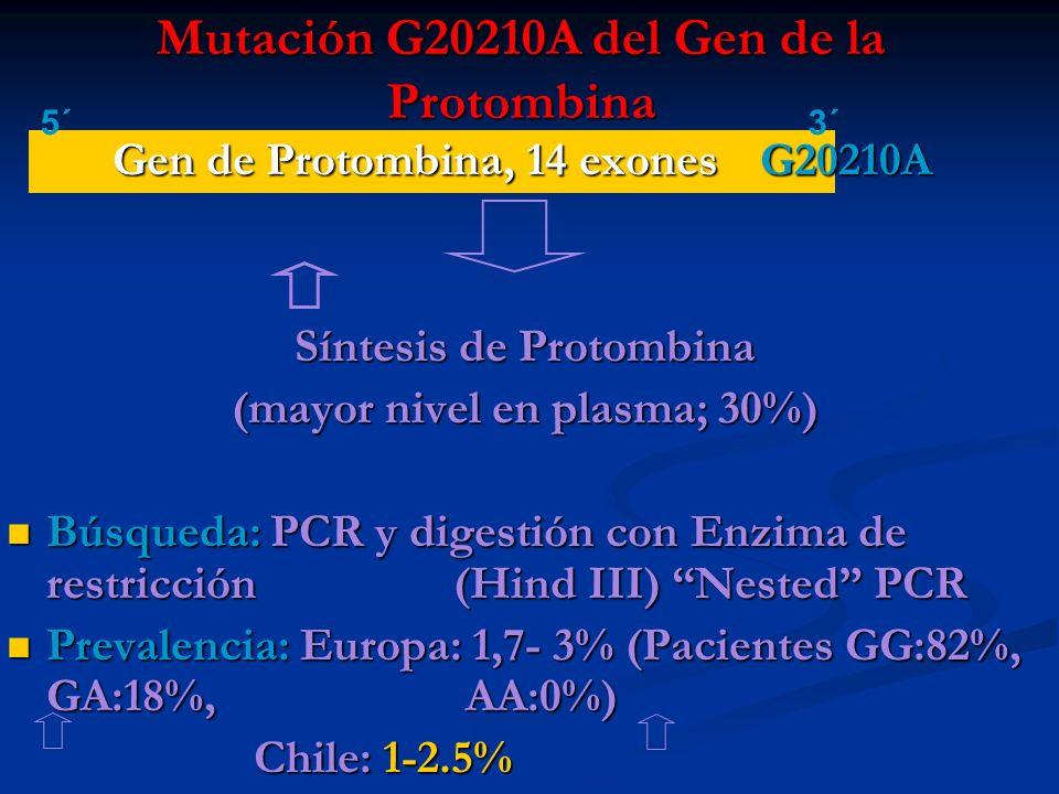 Mutación G20210A del Gen de la Protombina Gen de Protombina, 14 exones G20210A Síntesis de Protombina (mayor nivel en plasma; 30%) Búsqueda: PCR y dig