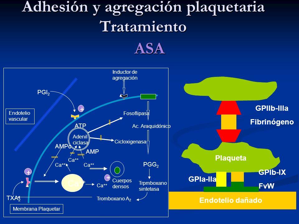 Adhesión y agregación plaquetaria Tratamiento ASA Plaqueta GPIIb-IIIa Fibrinógeno GPIb-IX FvW GPIa-IIa Endotelio dañado Endotelio vascular PGI 2 Induc