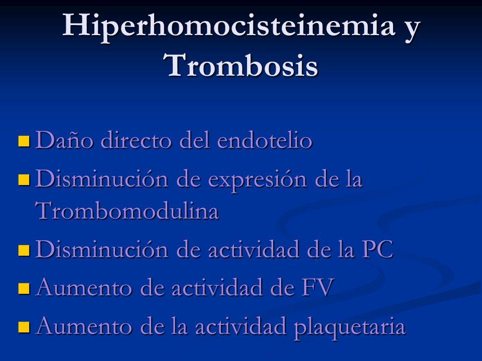 Hiperhomocisteinemia y Trombosis Daño directo del endotelio Daño directo del endotelio Disminución de expresión de la Trombomodulina Disminución de ex