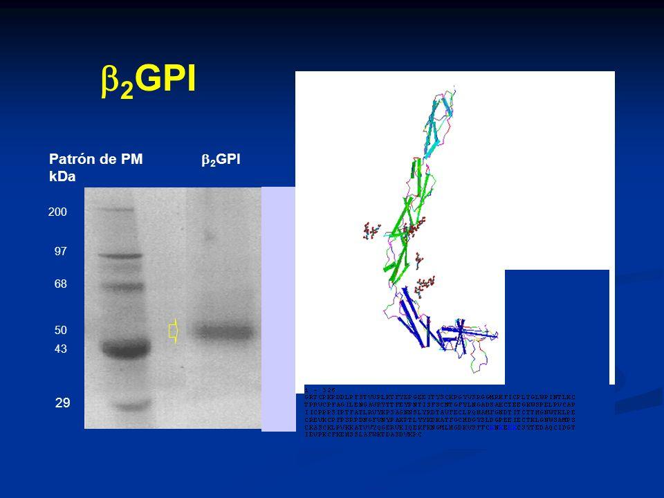 Patrón de PM 2 GPI kDa 200 97 68 50 43 29 2 GPI + III IV V II I NH2 N k k E k + + + 288 281 C C k C C + C C 88 247 306 316