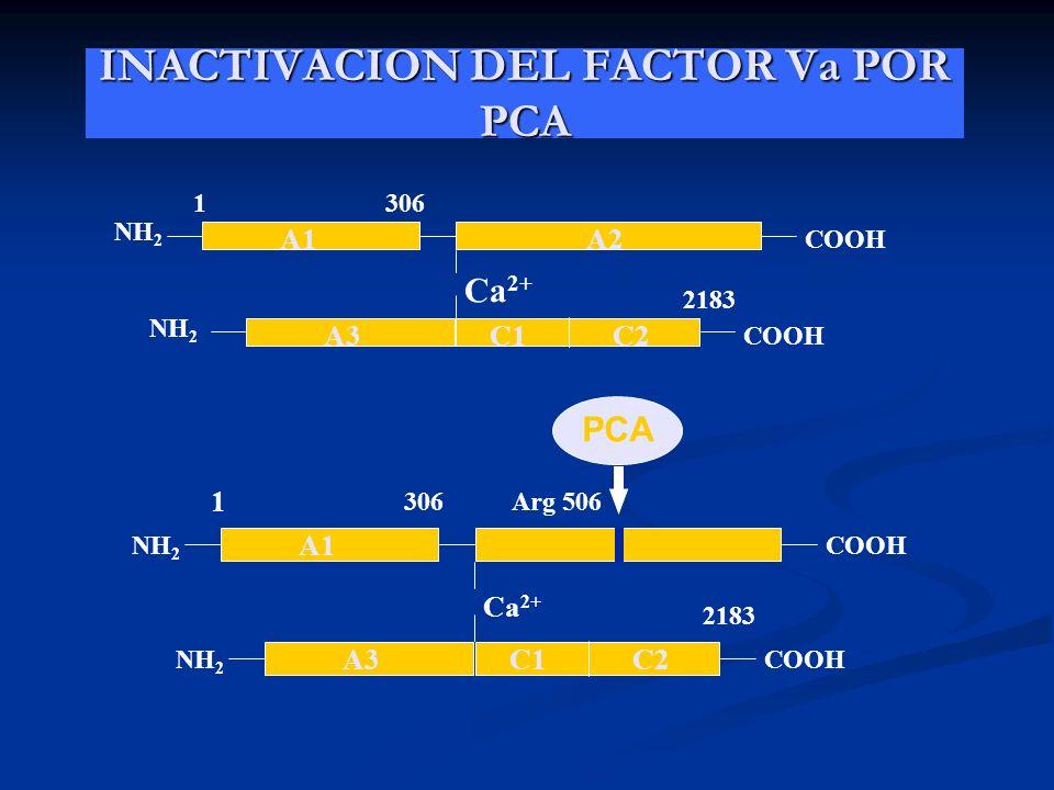 INACTIVACION DEL FACTOR Va POR PCA NH 2 COOH Ca 2+ 1306 2183 A1A2 A3C1C2 NH 2 COOH NH 2 COOH Ca 2+ 1 306 2183 A1 A3C1C2 NH 2 COOH Arg 506 PCA