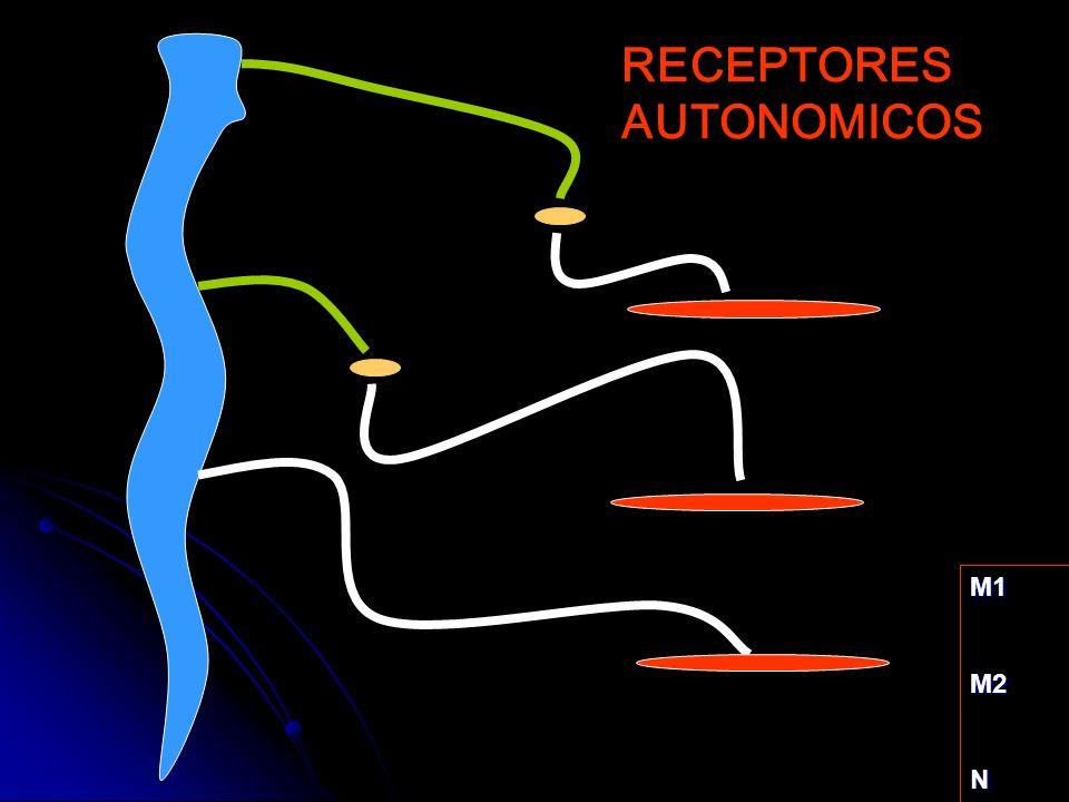 M1M2N RECEPTORES AUTONOMICOS
