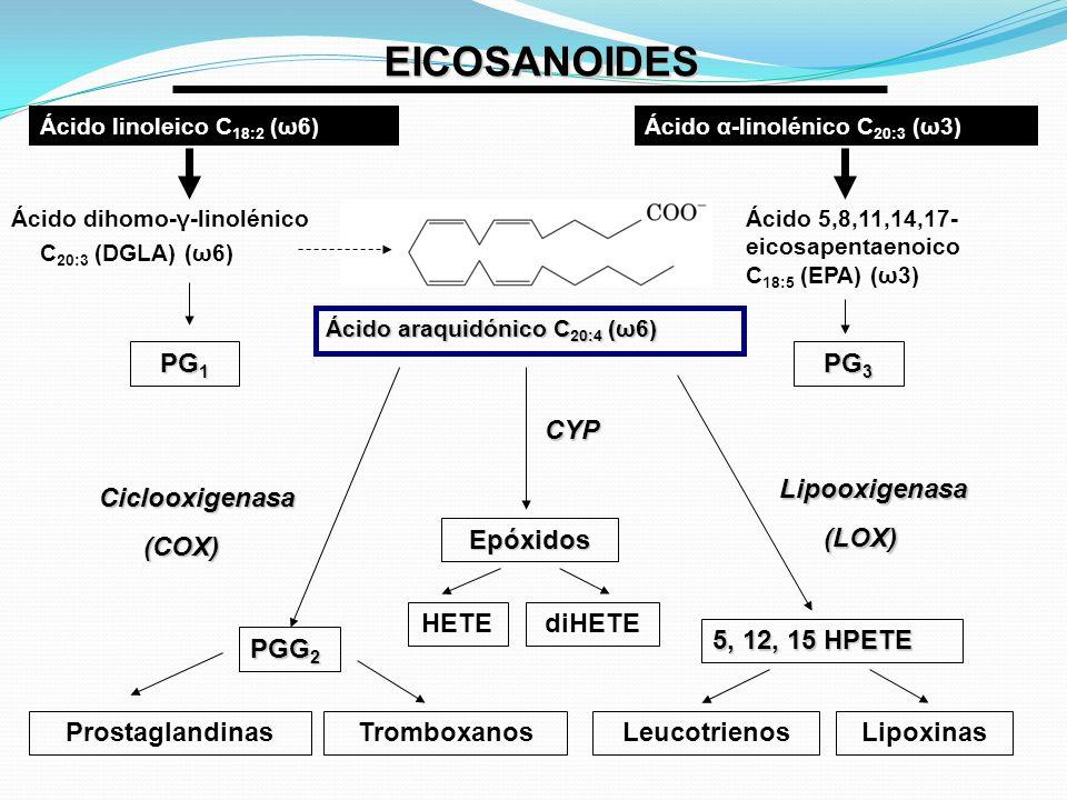 EICOSANOIDES PG 1 PG 3 Ácido 5,8,11,14,17- eicosapentaenoico C 18:5 (EPA) (ω3) Ácido α-linolénico C 20:3 (ω3)Ácido linoleico C 18:2 (ω6) Ácido dihomo-