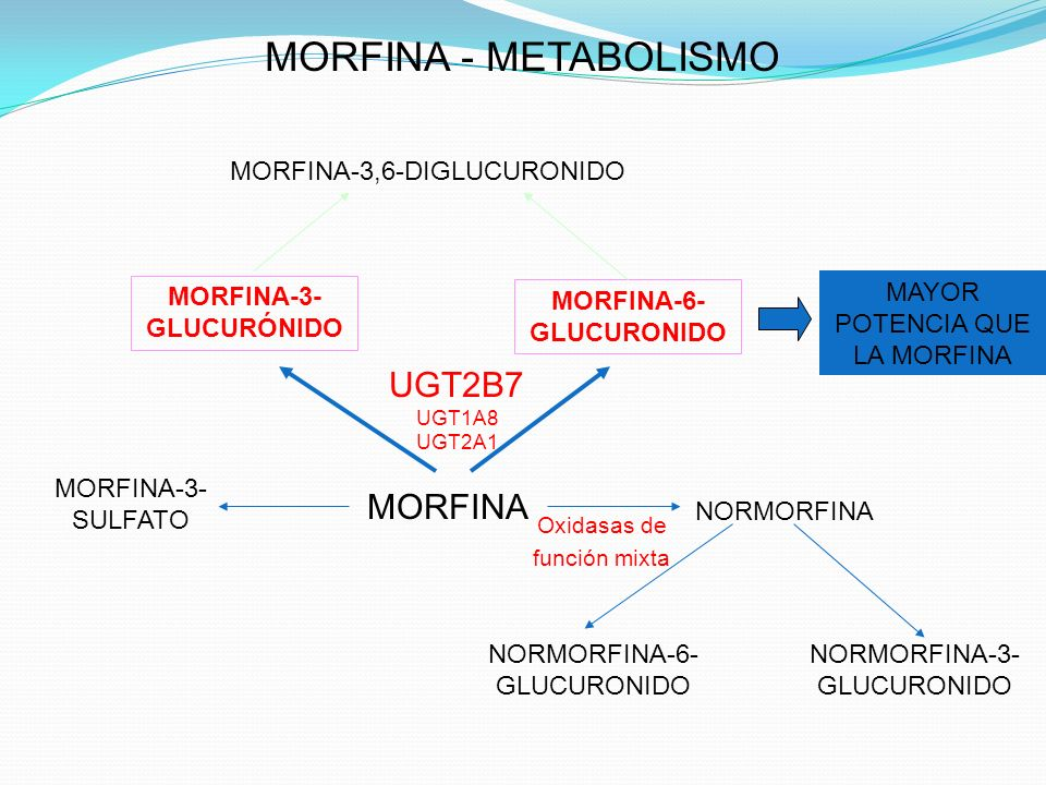 MORFINA UGT2B7 UGT1A8 UGT2A1 NORMORFINA MORFINA-3- GLUCURÓNIDO MORFINA-6- GLUCURONIDO MORFINA - METABOLISMO NORMORFINA-3- GLUCURONIDO Oxidasas de func